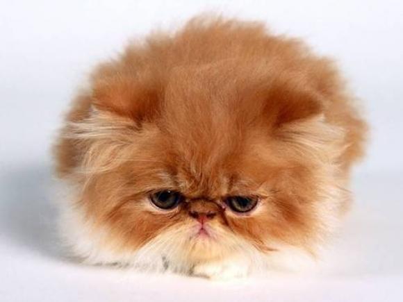 l-Cute-Kitten (1)
